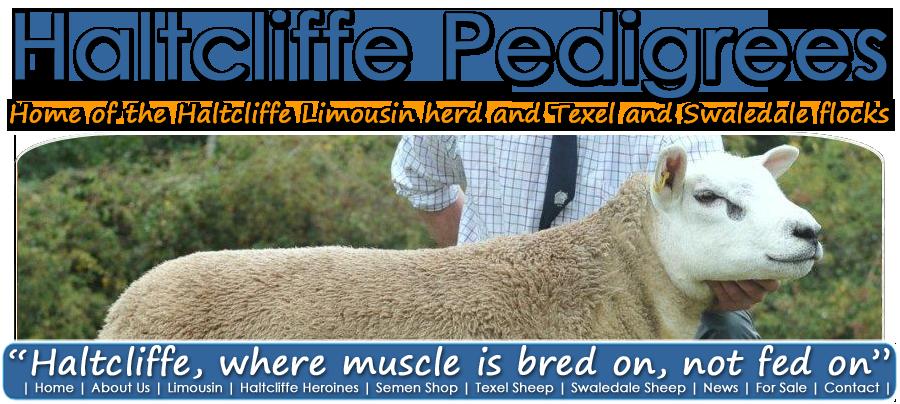 Haltcliffe Pedigrees   Texel Sheep  